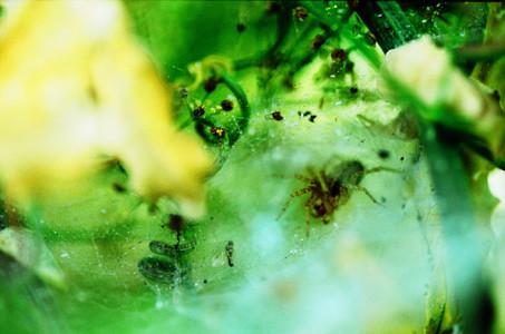 spidernest